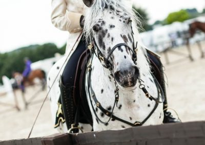 Pferde und Tänzer_Web-69